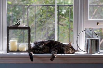 windowcat